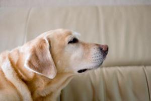 ¿Su perro huele como ... a perro?