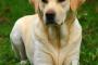 Cómo usar el inodoro para entrenar a tu cachorro en 3 días
