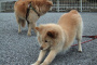 Doga: Yoga para perros.