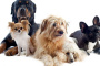 10 cosas que debes saber antes de conseguir un perro