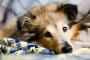 Ansiedad de separación en perros