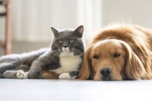 ¡Las mascotas también pueden tener alergias!