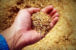 ¿Puede mi perro comer germen de trigo?