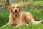 Cómo calcular la edad de un perro en los años humanos