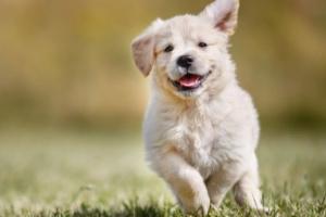 Aflicción: Cuando su perro llora la pérdida de otro perro....