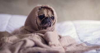 ¿Cuánto dura un ciclo de celos de los perros?