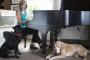 Musicoterapia para perros y gatos.