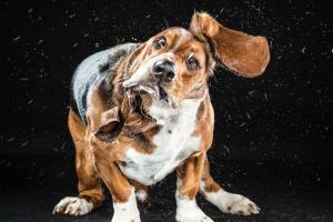 10 consejos para mantener su casa limpia, incluso si tiene un perro