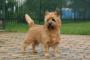 Nivel alto de azúcar en la sangre en los perros