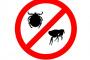 Pulverizadores y polvos para pulgas y pulgas.