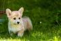 Capa grasa o nódulo debajo de la piel en perros