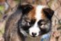 Hablemos de la crianza de perros profesional y responsable