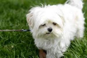 Controlando el ladrido de los perros