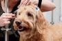 Tratamientos naturales para problemas de piel en perros