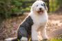 10 Hierbas curativas para perros (¡y humanos!)