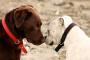 Causas, diagnóstico y tratamiento del herpes canino