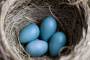 ¿Son los huevos realmente nutritivos para su ave?