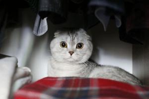 Toxicidad de Mothball en Mascotas: Lo que usted necesita saber