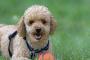 Las mejores razas de perros para niños y familias