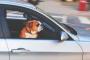 Compañero canino en la furgoneta: ¿sí o no?
