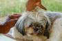 Picaduras de pulgas en perros: ¿cómo se ven?