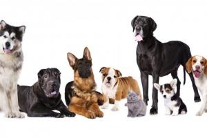¿Cuál es la raza de perro más vieja?