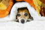 ¿Los perros tienen resfriados? Todo lo que necesitas saber.