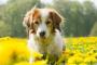 Efectos secundarios de los medicamentos de ansiedad en perros