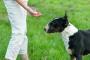 Enero es el mes del entrenamiento a su Perro