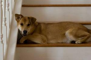 Diversión en interiores para tu perro en días lluviosos.