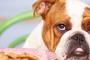 Cómo prevenir la diabetes en los perros