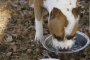 Enfermedad de Cushing en perros - Signos, diagnóstico y tratamiento