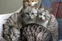 El color del gato y los rasgos de personalidad