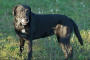 Los 10 mejores consejos para el entrenamiento de perros mayores