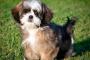 Enfermedad de Cushing en perros: signos, diagnóstico y tratamiento