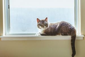 Trabajo de parto prematuro en gatos