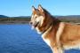 Inflamación de la piel, el músculo y los vasos sanguíneos en los perros