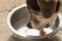 Piedras en los riñones en perros: síntomas, causas y tratamientos.