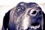 Casa a prueba de perros: perros mayores.