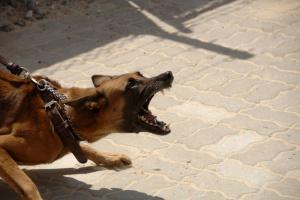 Entendiendo la agresión canina