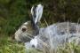 Infección parasitaria en conejos