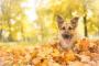 Mal aliento (crónico) en perros
