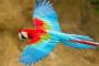 Los cuidados y problemas de salud en las guacamayas de alas verdes