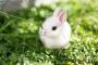 Estates gastrointestinales en conejos: bloqueo intestinal
