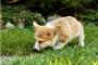 5 razones por las que los perros comen hierba