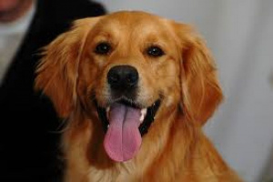 Problemas cardíacos (complejos prematuros) en perros