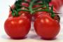 ¿Puede mi perro comer tomates?