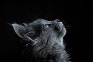 Cómo los gatos ven el mundo
