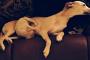 Mastitis en perro: síntomas, causas y tratamiento.