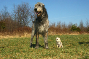 ¿Qué tamaño de perro debe obtener? Aquí hay algunas cosas a considerar